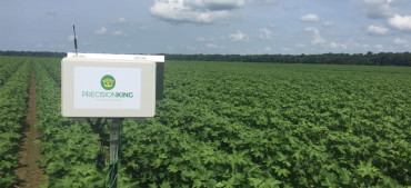 Case Study: Rice Farmers Use IoT to Save Water and Carbon Emissions