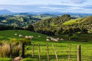 NZ IoT Alliance and MBIE Team Up for Farm IoT Trial