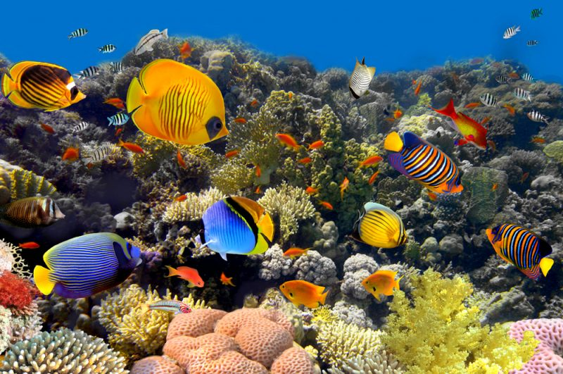 Accenture, Intel Use AI To Save Coral Reefs
