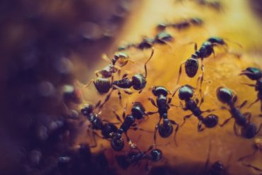 Vehicle Emissions Could Be Halved With Ant Algorithm
